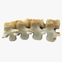 3d animal spine model