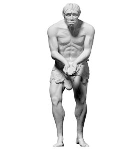 scan homo heidelbergensis obj free
