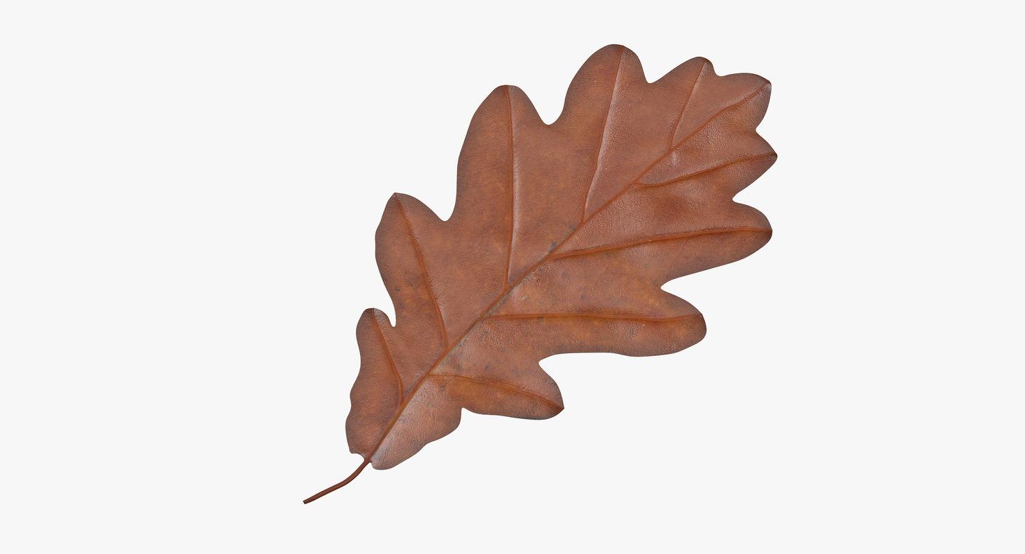 oak leaf orange max