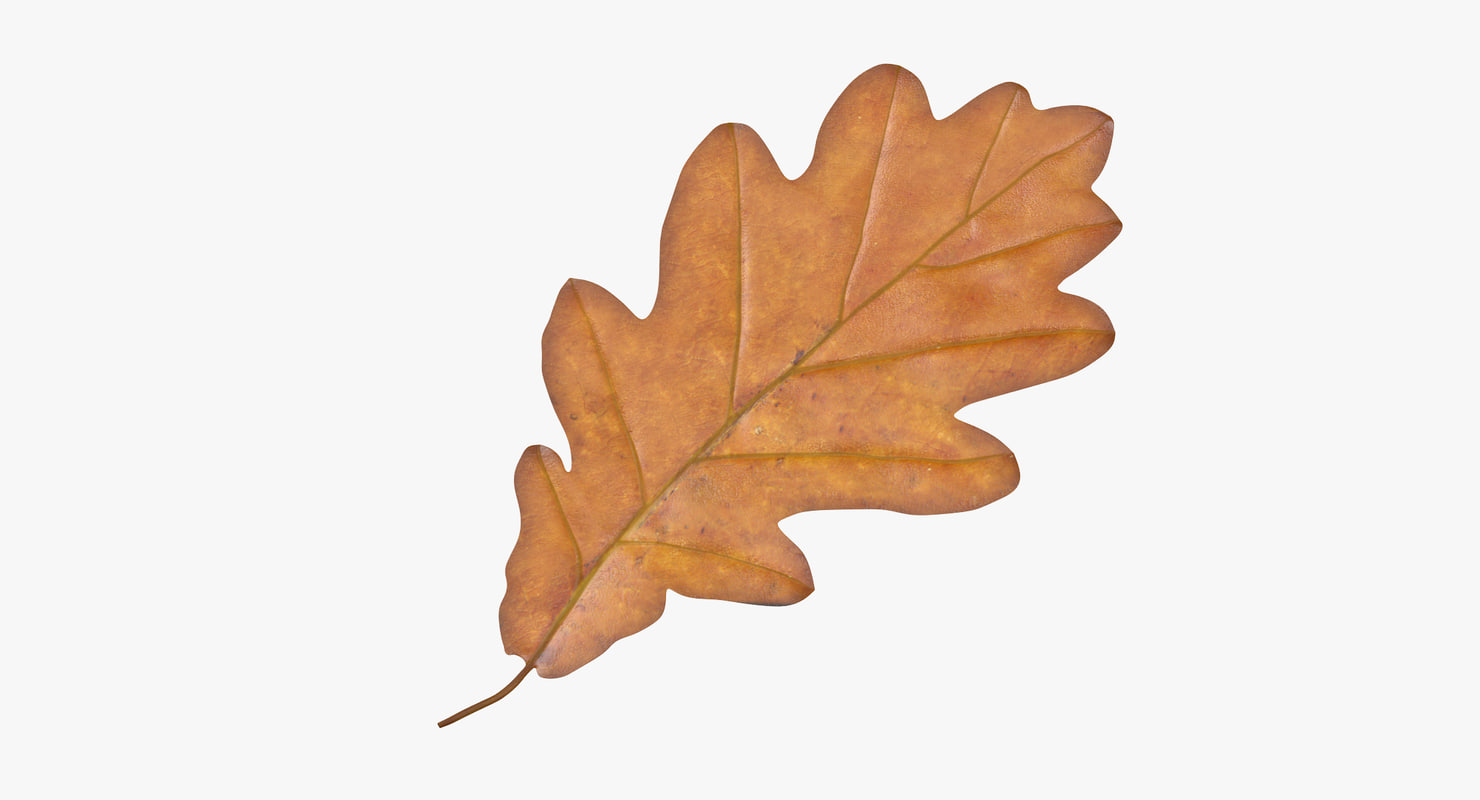 oak leaf yellow 3d model