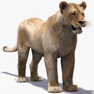 3d lioness fur