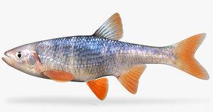 lythrurus umbratilis redfin shiner 3d model