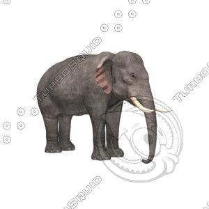 3d model elephant asian