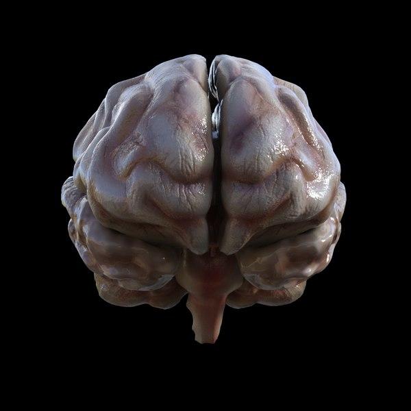 c4d human brain