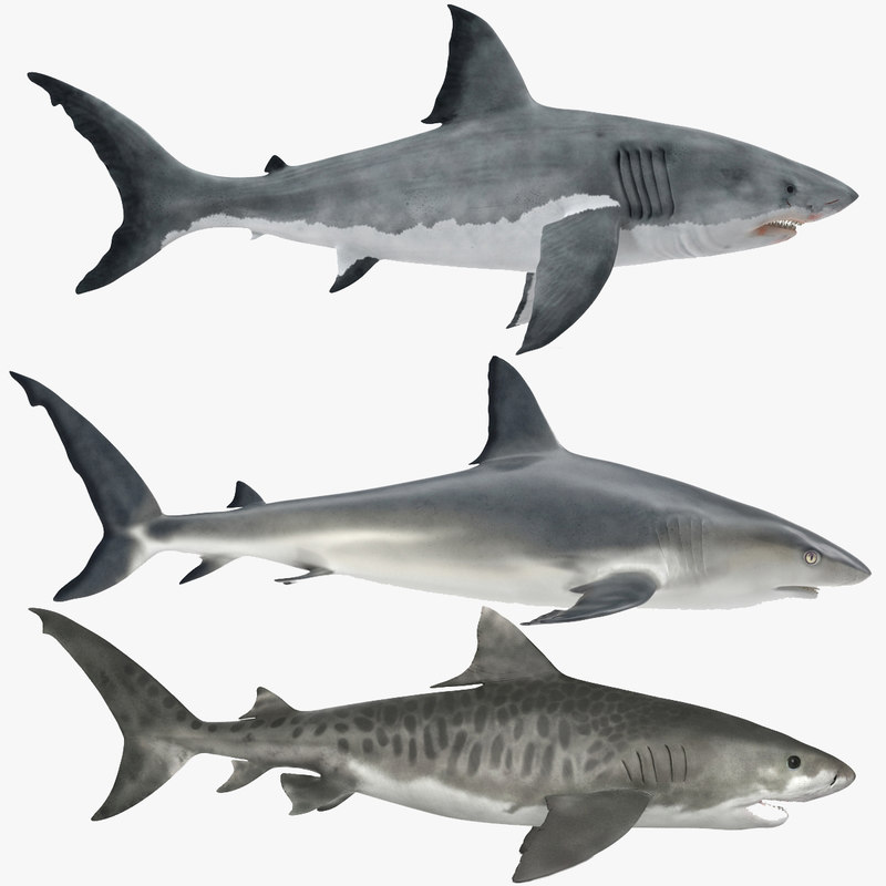 sharks set great 3d obj