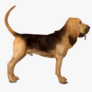 3d model bloodhound black tan dog