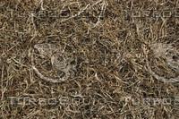 Grass_Texture_0020