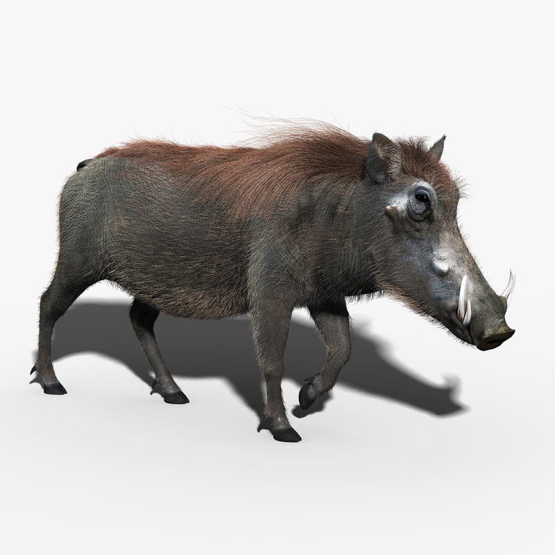 3d warthog fur hair animation model