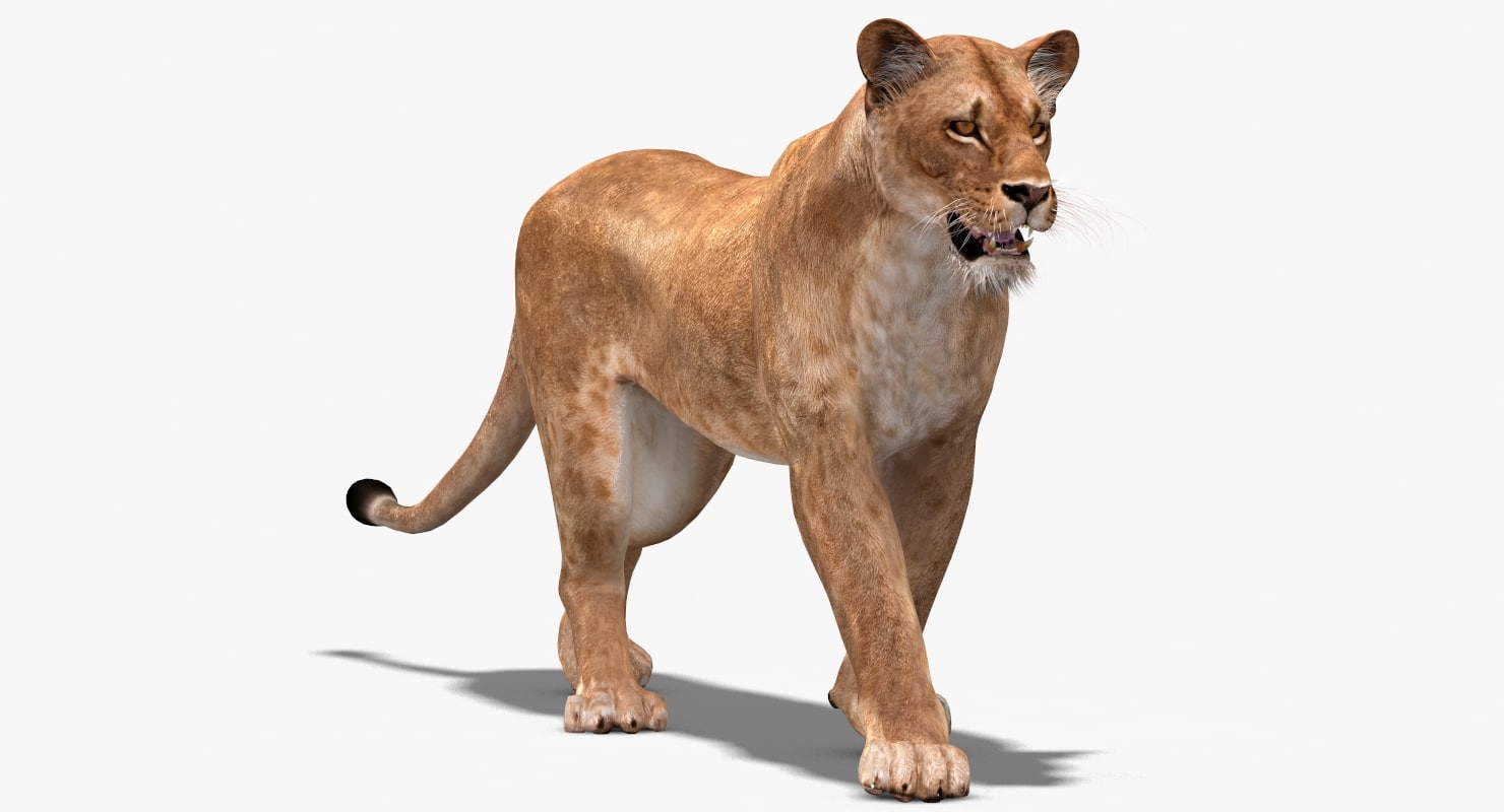 3d lioness rigging animation cat