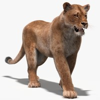 lioness fur rigging animation obj