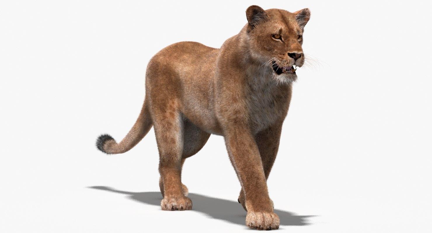 lioness fur rigging animation obj
