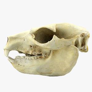3d dog skull
