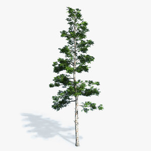 3d professionally conifer trees