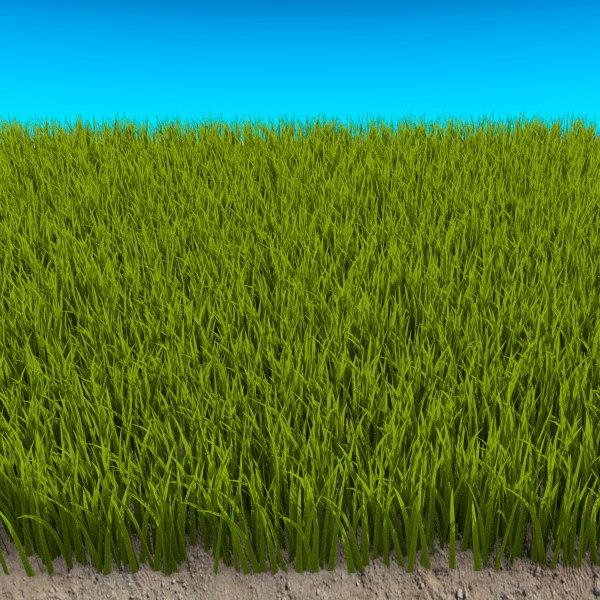 3d model tall grass