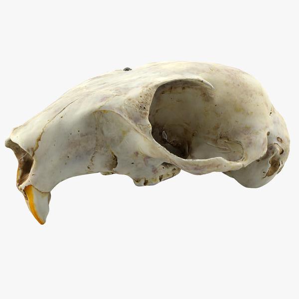 squirrel skull obj