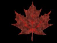 3d sugar maple leaf model