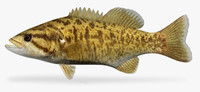 3ds max micropterus dolomieu smallmouth bass