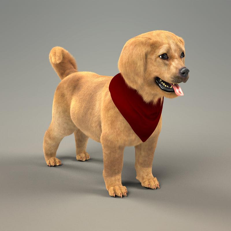 cute retriever puppy fur 3d model