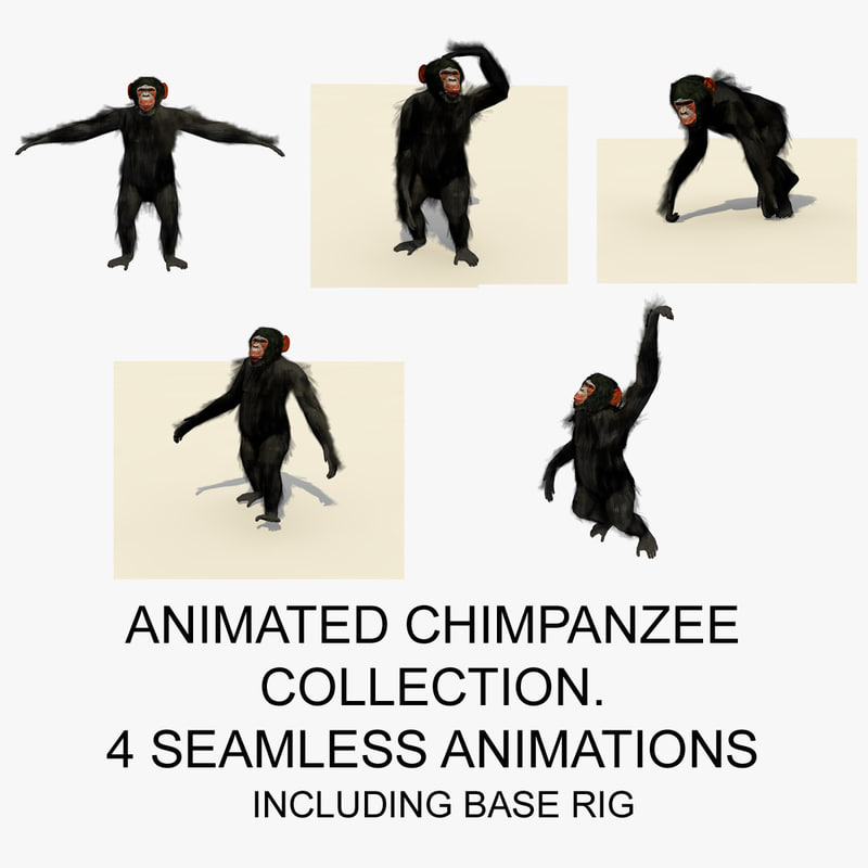 3d rigged chimpanzee animations chimp