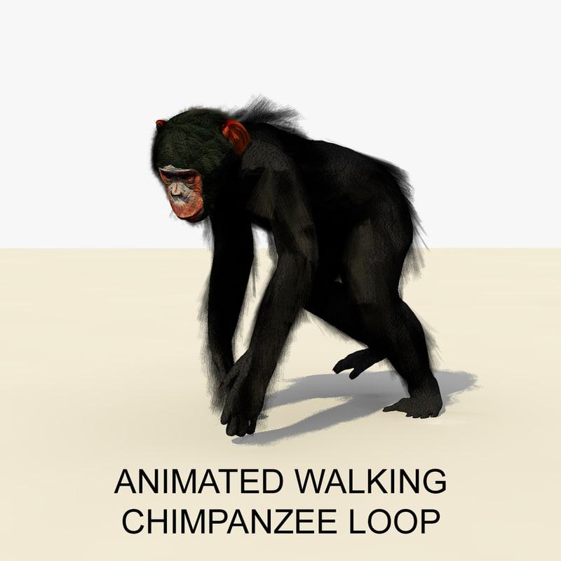 3d rigged chimpanzee walking animations
