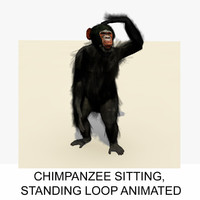 3d rigged chimpanzee animation chimp