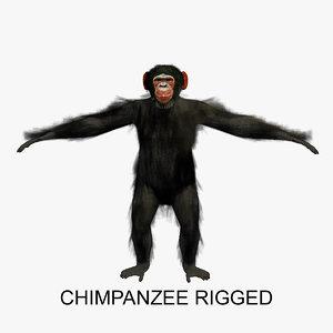 rigged chimpanzee chimp 3d model