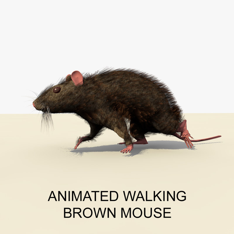 brown mouse animations c4d