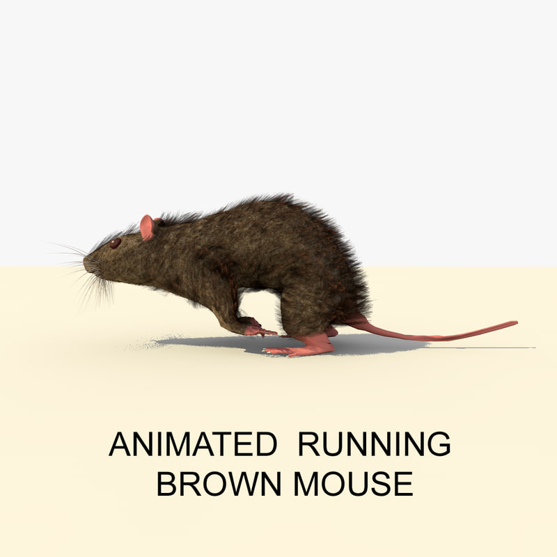 3d model running brown mouse animations