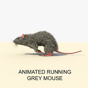 grey running mouse animations c4d