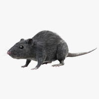 grey rat - fur 3d obj
