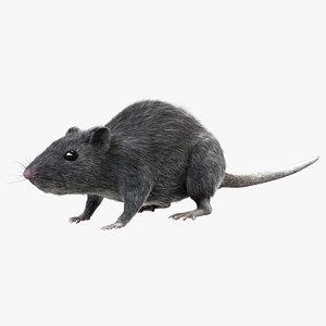 grey rat - fur 3d obj
