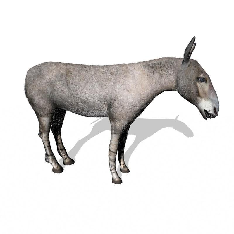 3d wild ass model