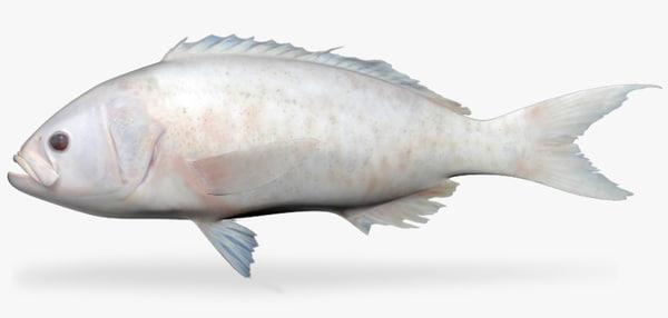pacific creolefish 3d ma