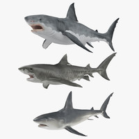 rigged sharks 3d model