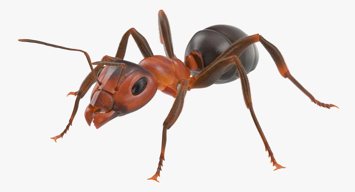 ant poses 3d model