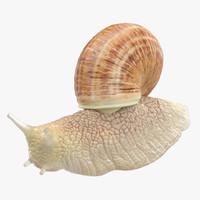 snail 01 3d max