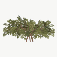 Bush Type 3 Low Poly