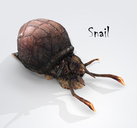 3d snail land shell model