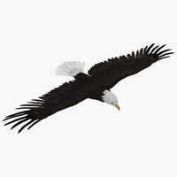 3ds max bald eagle rigged