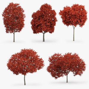 red maple trees 3d model