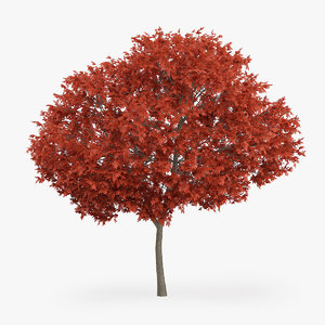 3d red maple tree 8m
