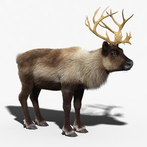 3d max reindeer fur
