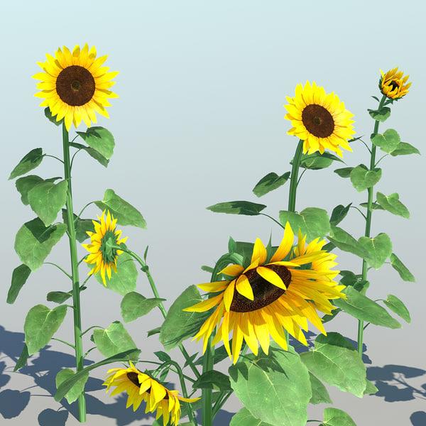sunflower 9 3d model