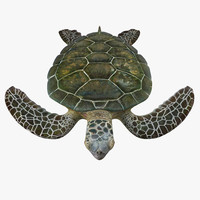 Green Sea Turtle Rigged