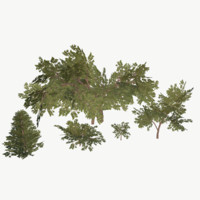 Bush Pack Low Poly