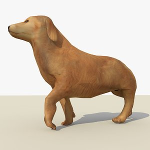 3d model golden retriever dog animations