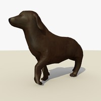 Chocolate Labrador Retriever  Dog Animated