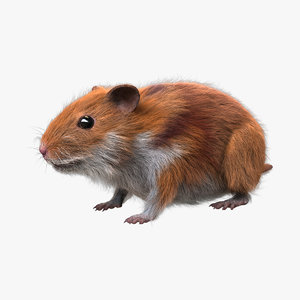 hamster fur 3d model