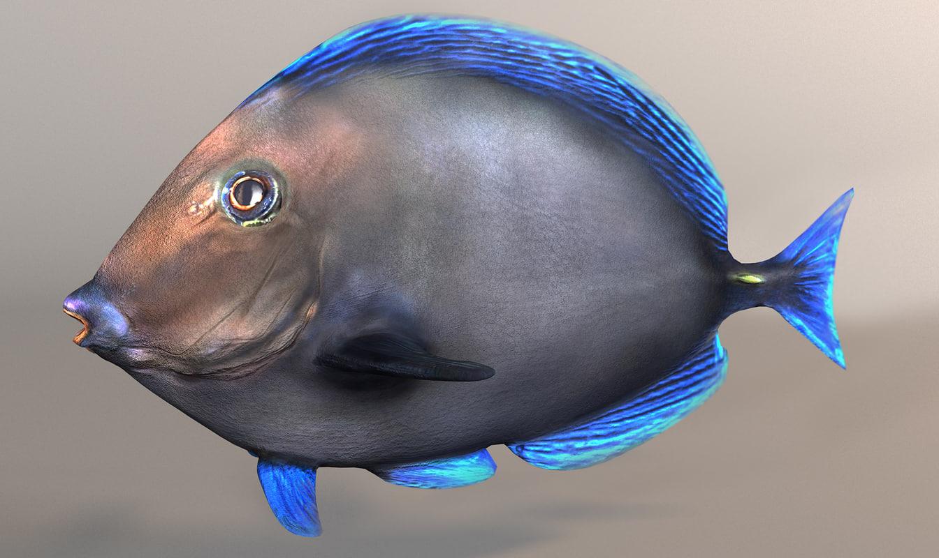 fish paracanthurus hepatus blue 3d model