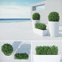 3d model modern bushes